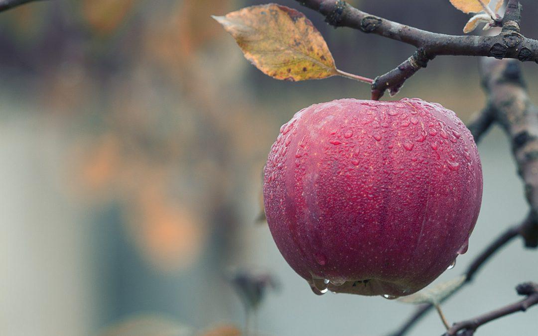 Urodzajne drzewka owocowe