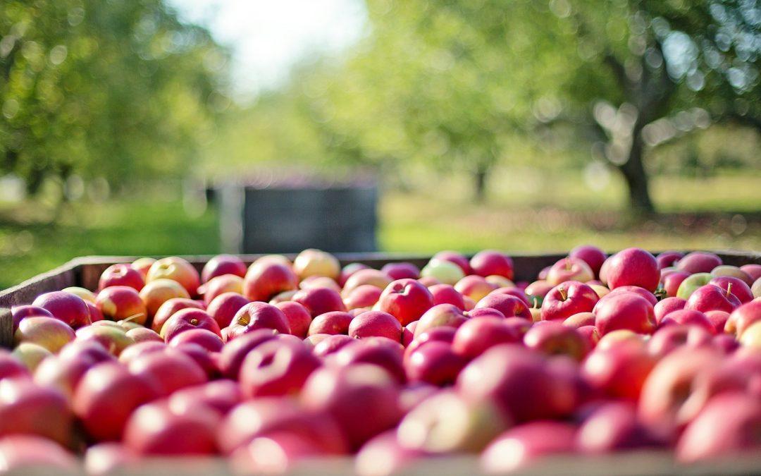 Nie każde jabłko jest takie same
